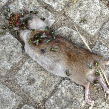 Tote Tiere sind nie schön