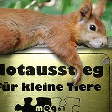 mog61 rettet kleine Tiere